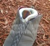 air-jordan-xvi-cherrywood-unreleased-2012-sample-05
